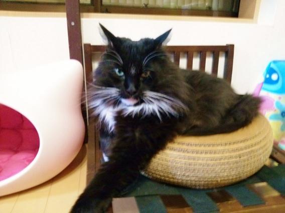 りりしい猫